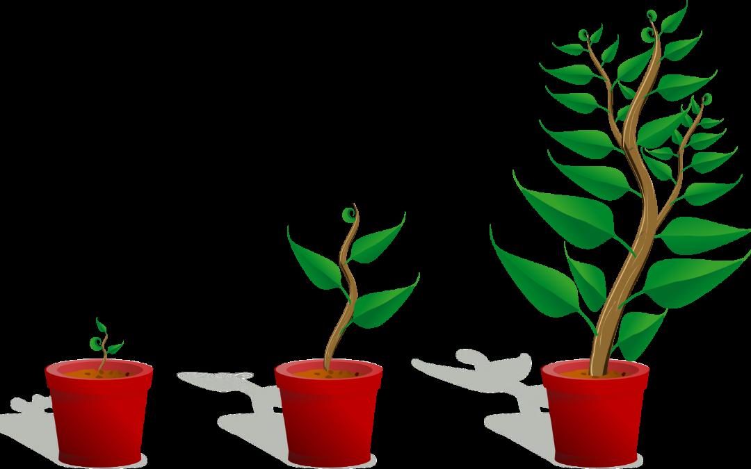 Groei leiderschapskwaliteiten